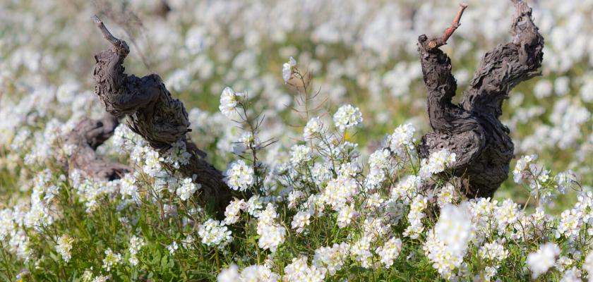 La biodiversité dans le vignoble selon la Maison Gabriel Meffre