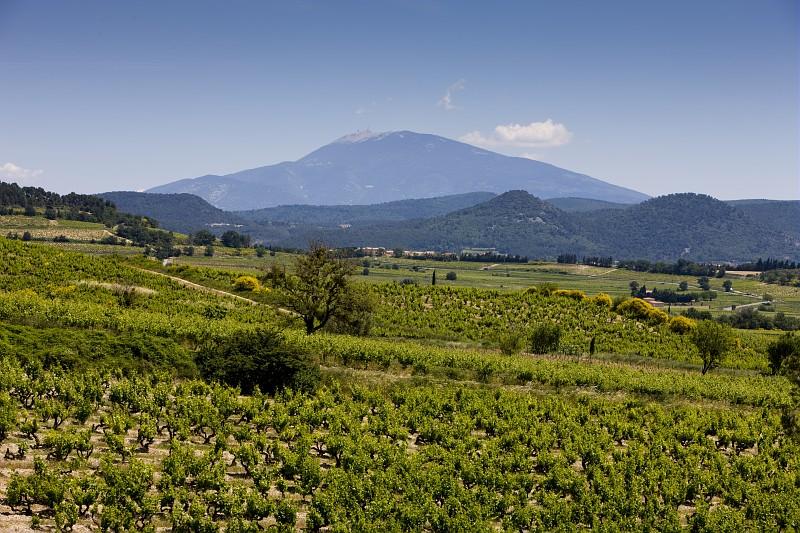 Vignoble Cairanne Vallée du Rhône