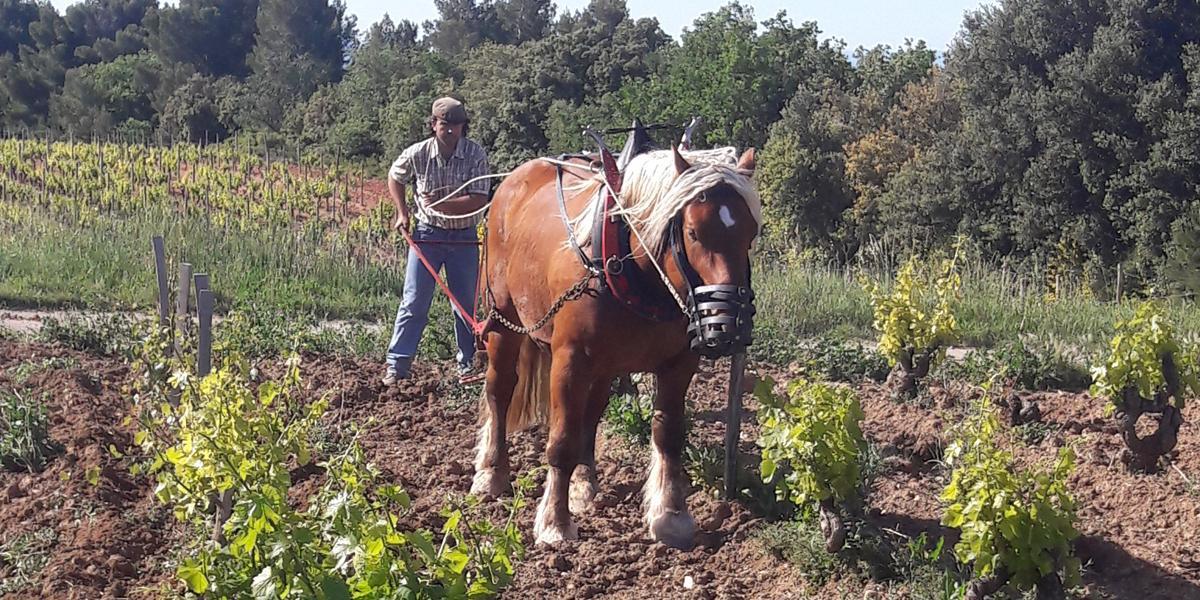 Utilisation d'un cheval de labour sur nos domaines