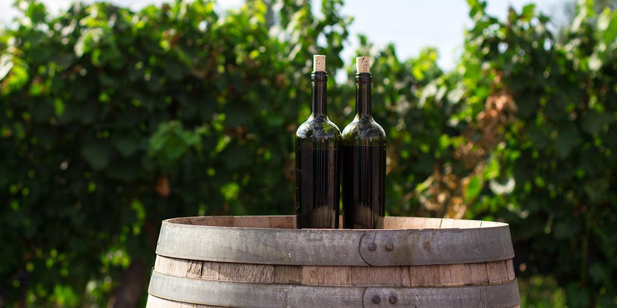 Bouteilles de vins disposées dans les vinges