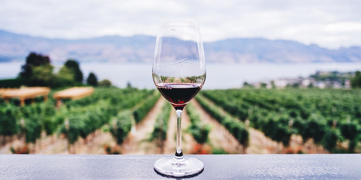 Les tanins dans le vin, un sujet expliqué par la Maison Gabriel Meffre