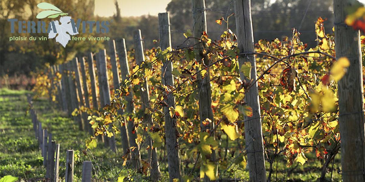 Production raisonnée ou biologique, les engagements de la Maison Gabriel Meffre pour une viticulture plus respectueuse