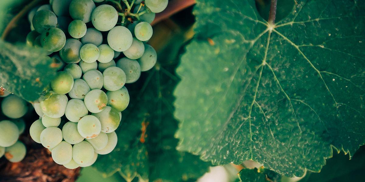 Quelles sont les vertus prêtées au vin ? Est-ce de l'info ou de l'intox ?