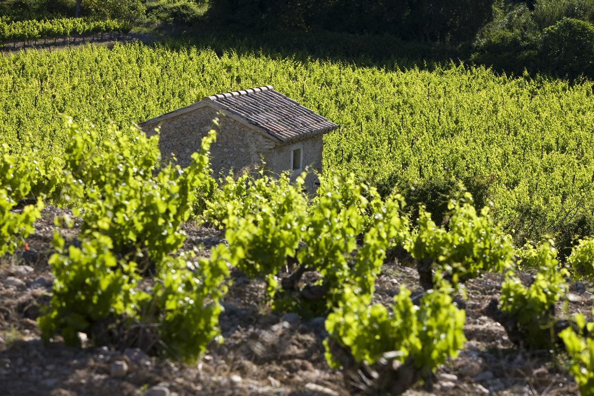 Laurus Cotes du Rhone Villages