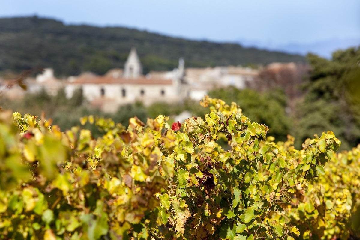 Vignoble de Tavel